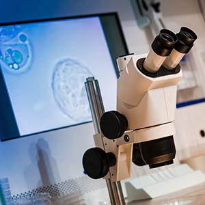 「iPS細胞」が7位にランキング、京都大学が脳にiPS移植手術実施<注目テーマ>