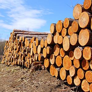 「木材」が10位、木材不足への関心高まり関連銘柄に思惑<注目テーマ>