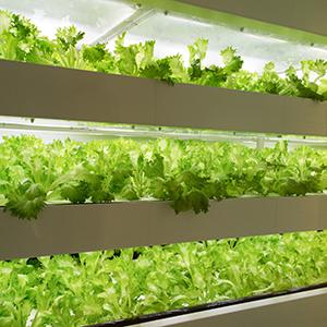 「植物工場」が24位にランク、野菜価格高騰で引き合い強まる<注目テーマ>